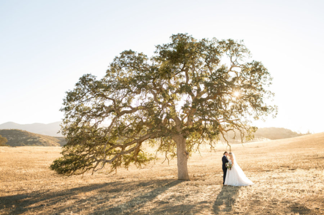 Bride and groom under a giant oak tree in Paso Robles